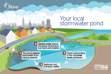 Get to know your local stormwater pond Ottawa