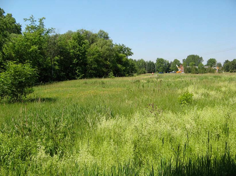 This is an image of one of three landscape zones identified in the Study Area is considered.  Hay fields evolved into what is now grassy meadow with woody vegetation seeding from the surrounding residential development.  (City of Ottawa, 2015)