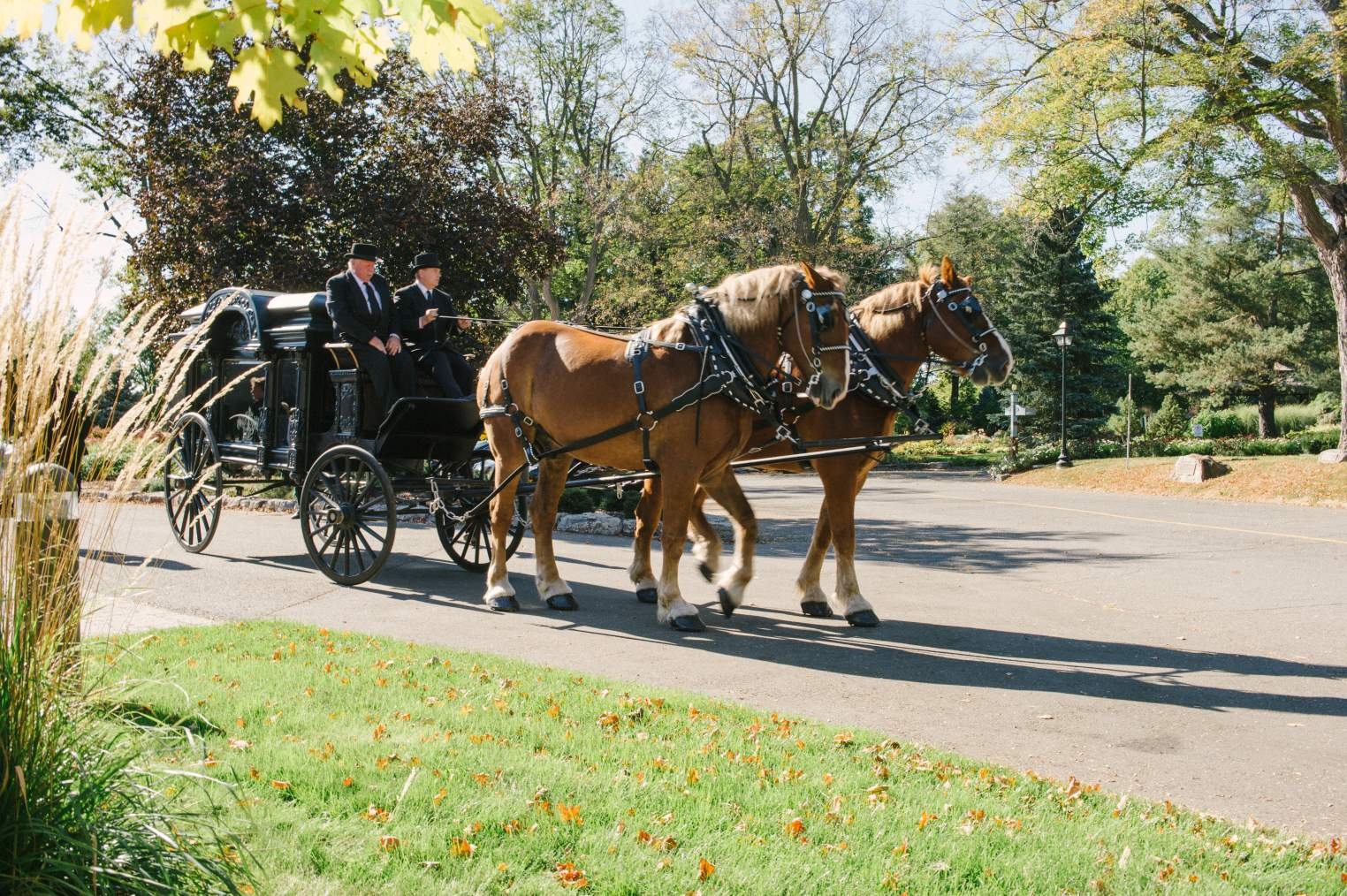 Horse drawn carriage Hurst at Reinterment Service