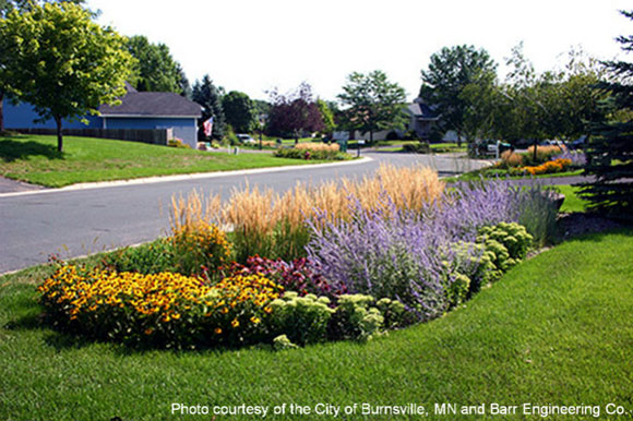 Example of a rain garden in a residential area