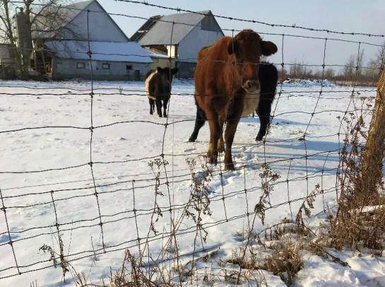 Photo de vaches dans un champ