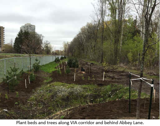 Plant beds and trees along VIA corridor and behind Abbey Lane.