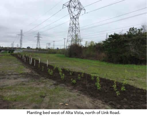 Planting bed west of Alta Vista, north of Link Road.