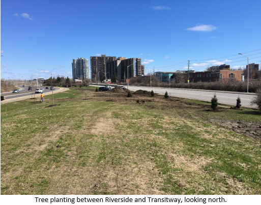Tree planting between Riverside and Transitway, looking north.
