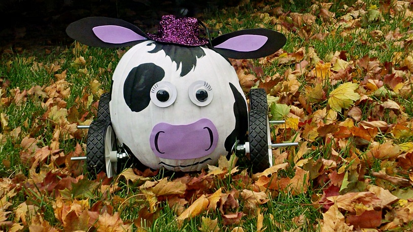 pumpkin decorated like a cow