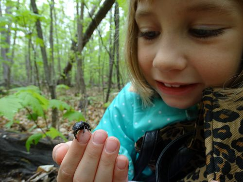 A small girl holding a beetle.