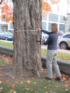 Measuring a tree with a measuring tape