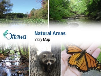 Examples of natural areas showing marsh, woodland, creek, raccoon, butterfly