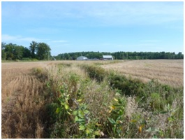 The vegetated buffer on Eastman's property.